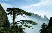 Mt.Huangshan 4-Day Package Tour