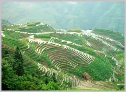 Longji-Terraced-Field-2