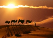 Silk Road Adventure Tours